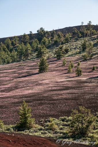 Cinder cone colored by wildflowers.